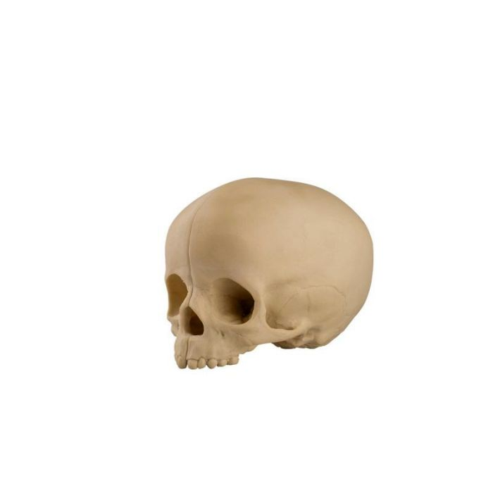 1019705, ORTHO bones Standard Pediatric Hollow Skull with Support Block