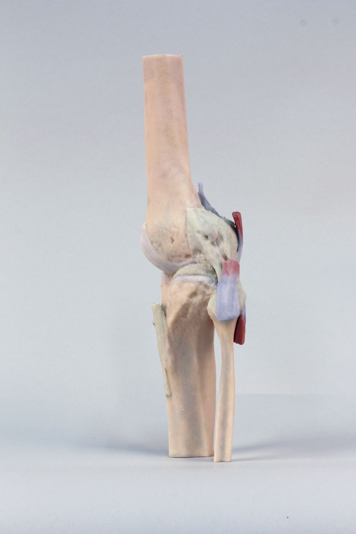 Knee Joint, extended