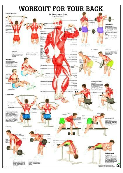 Workout for your back, englisch, 70x100 cm, Papier